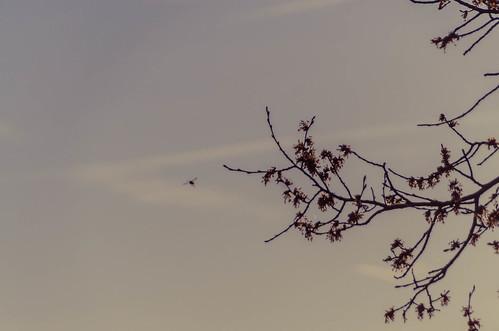 097 Spring