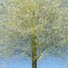 tree visions by Sandra Bartocha