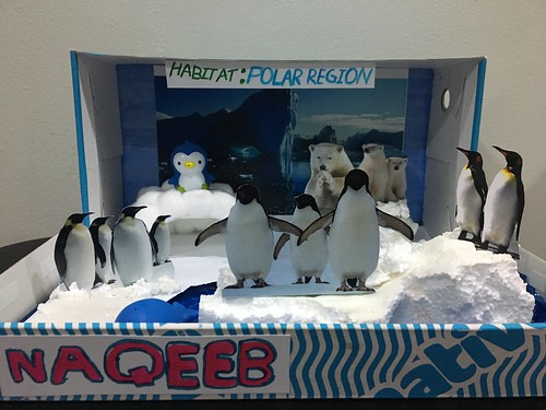 Qeeb's School Project - Diorama polar region
