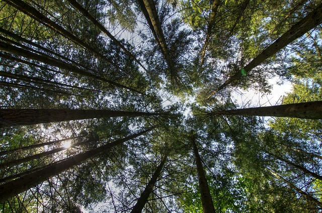 Stover Park Tree Canopy
