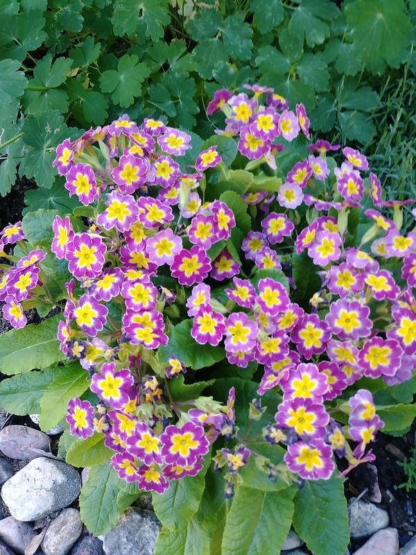 Le jardin de Lavandula 2018 - Page 9 42389562532_83ef66b032_c