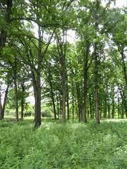 Wolf Road Prairie Nature Preserve 2020-2018