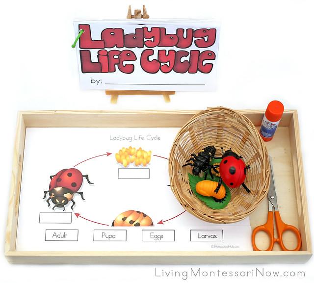 Ladybug Life Cycle Tray and Reader