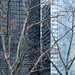 NYC Arch & Trees #18