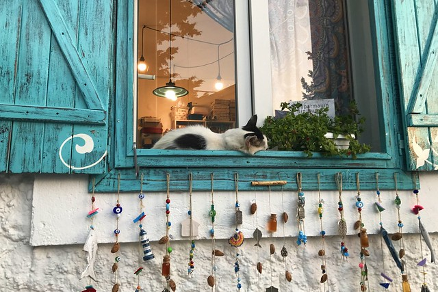 The Cat at the Window