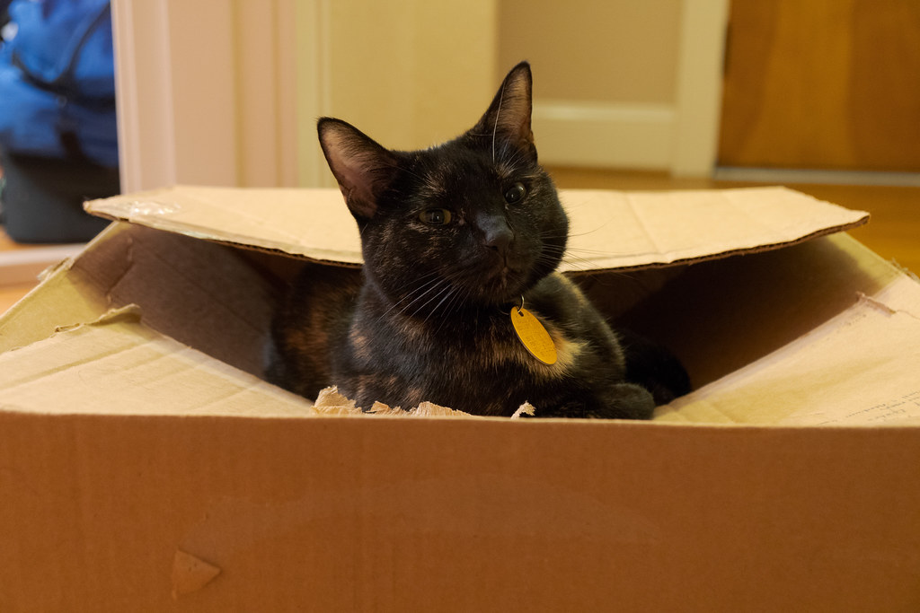 Our tortoiseshell cat Trixie sits in a box as we prepare to move