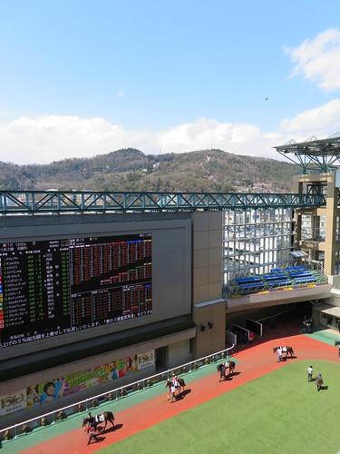 福島競馬場の春開催で見られる信夫山の桜とパドック