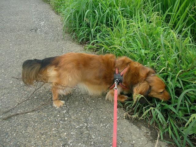 犬 散歩 グッズ 子犬