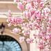 Magnolia by Jackie Rueda