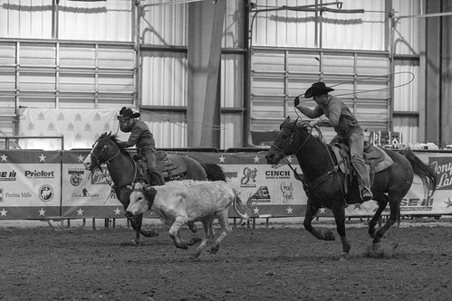 teamroping ustrcbluegrasschampionship usteamropingcompetition ustrc caseycounty calfroping
