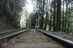 走入深林   Into the wood