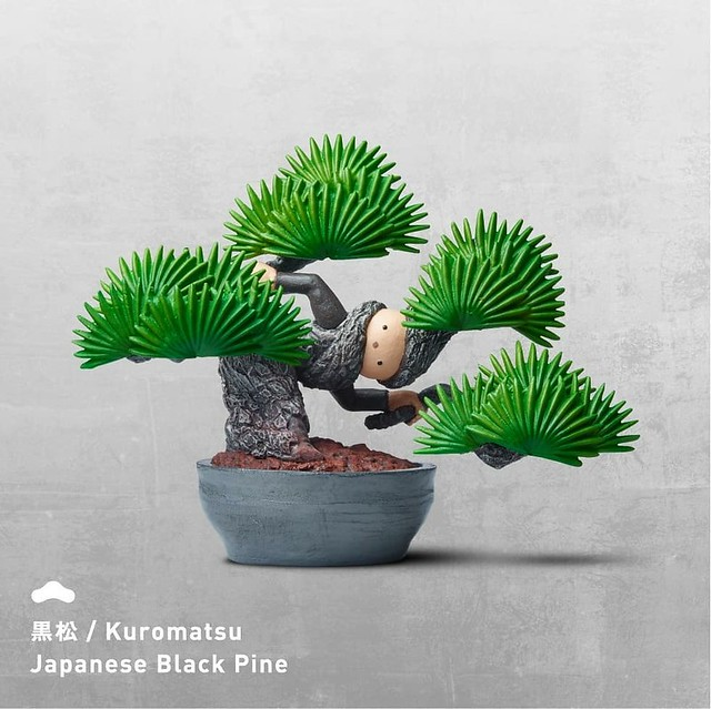 盆惱扭蛋:黑松 (Kuromatsu / Japanese Black Pine)