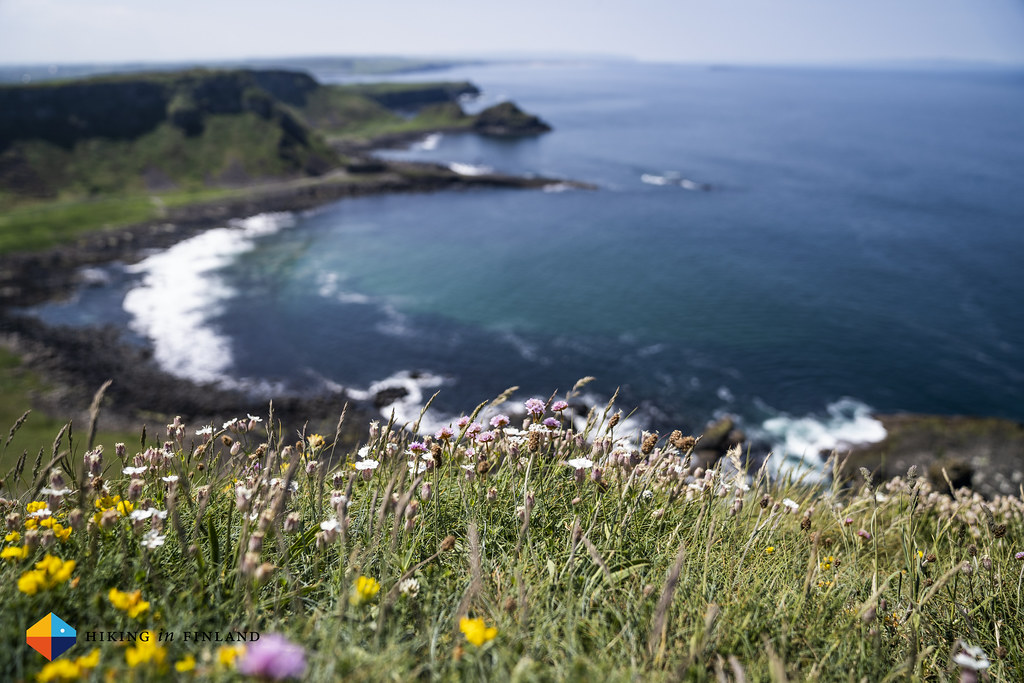 Flowers & The Giant's Causeway