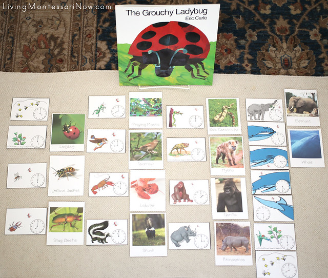 The Grouchy Ladybug Sequencing and Matching Layout