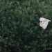 Barn Owl - Woods Mill (27)