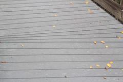 Boardwalk in Weedon Island State Park