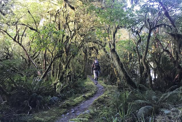 Mossy forest near Mackay Falls