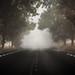 Silent Road by Alexandru Jitaru