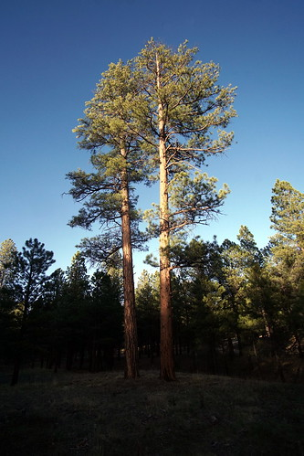 Jacob Lake, Kaibab National Forest