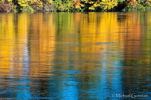 reflections river water fallcolors autumncolors skinnerbuttepark eugene oregon willametteriver reflection golden colorful waterreflections nikon d90