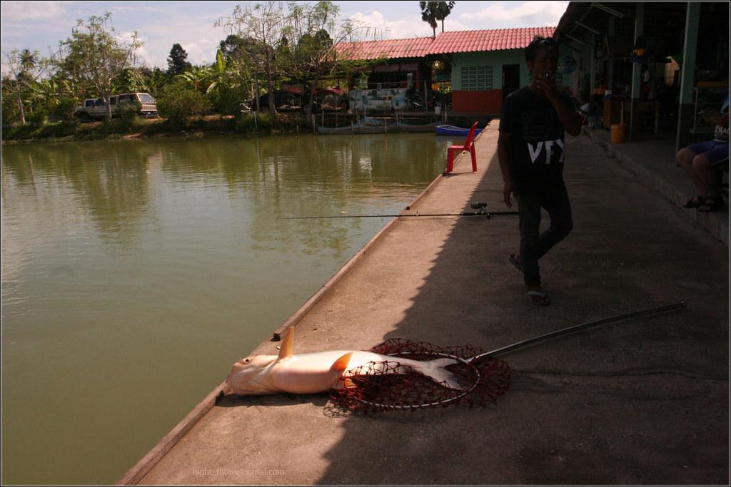 Thai_fish_05
