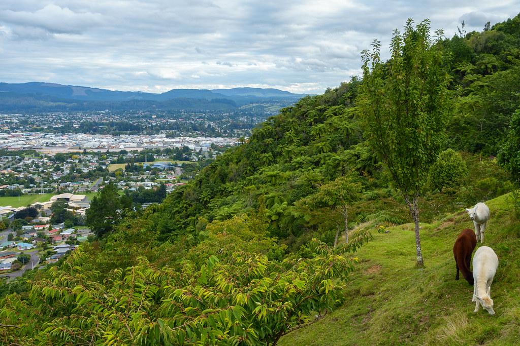 Rotorua-03257