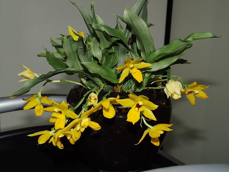 Orchideen-Neuzugang 2 - Seite 2 41119018801_1d67a49116_b