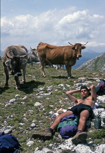 1997-Mark and Cows Cantabria 1997
