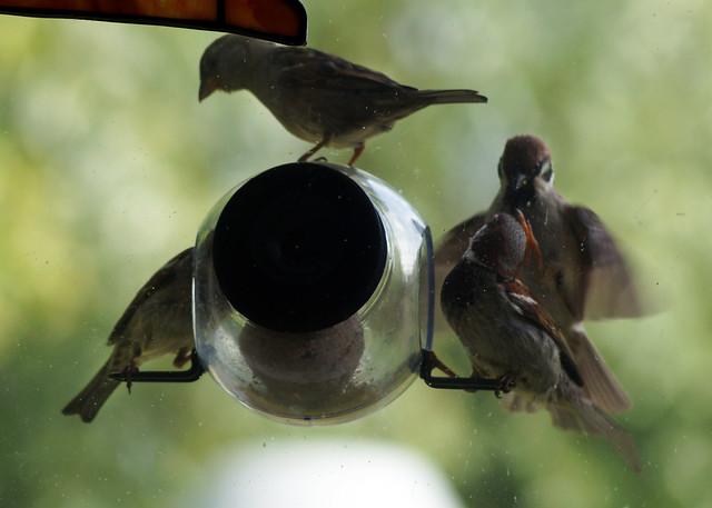 birdfeederC03816