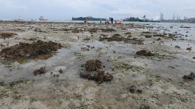 Seagrasses at Terumbu Raya, Jun 2018
