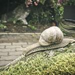 180621-102624 - Snail Bokeh