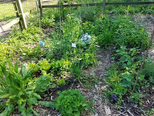 Mid-May Garden Scenes