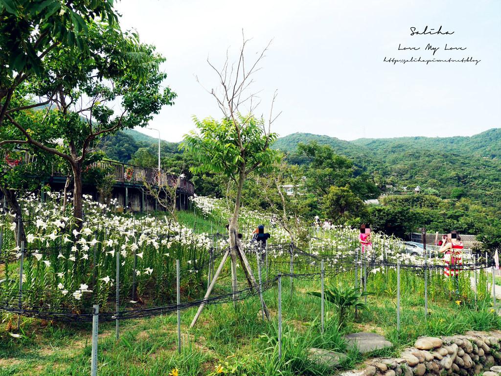 內湖碧山巖景點一日遊推薦同心池吊橋 (12)