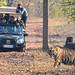 Tiger Crossing Tadoba Tiger Reserve DSC_9452 by JKIESECKER