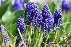 I fiori, sono le creature più dolci che Dio abbia mai fatto e alle quali si sia dimenticato di infondere un'anima.