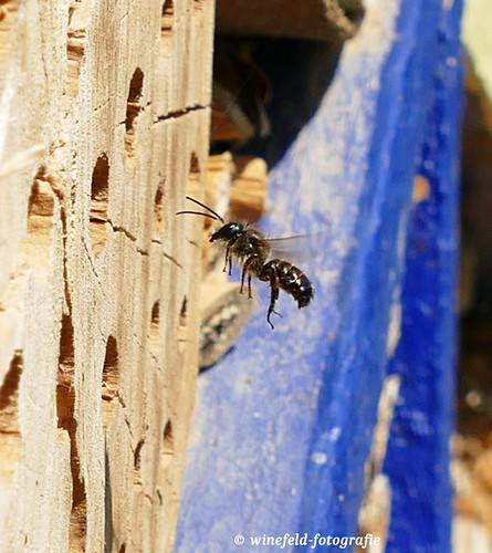 Insektenhotel / Insect hotel