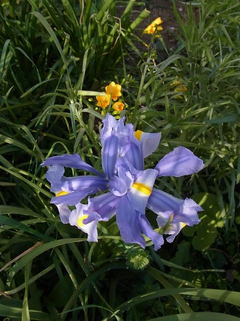 Photo:Iris By nofrills