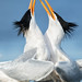 Courting Terns by just4memike
