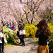 Haratani-en (Haratani Garden) - Kyoto