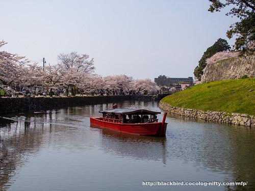 Cherry blossoms 20180403 #06