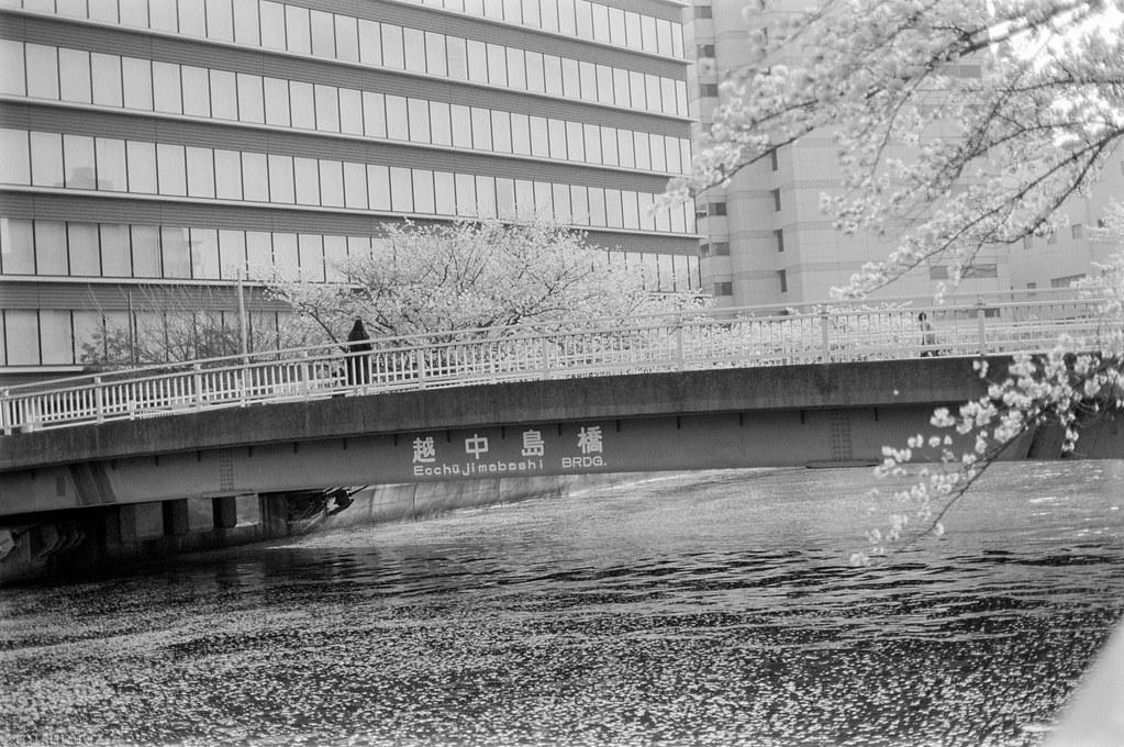 2018-04-21 深川の桜 005