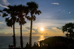 Sunset with Palms at Promthep Cape, Phuket island, Thailand