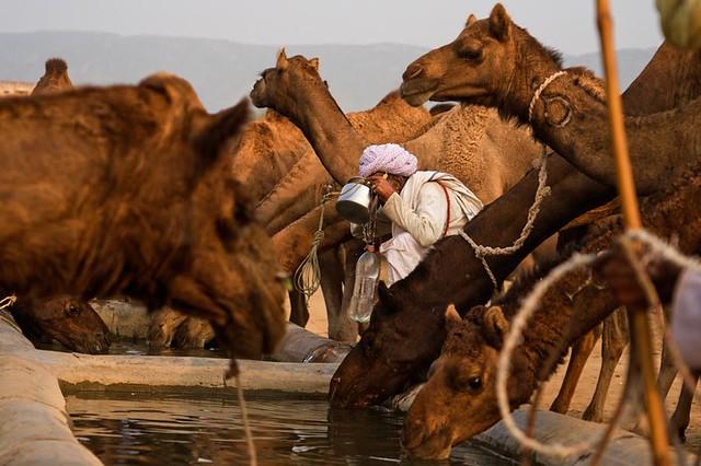 Pushkar Mela. Rajasthan