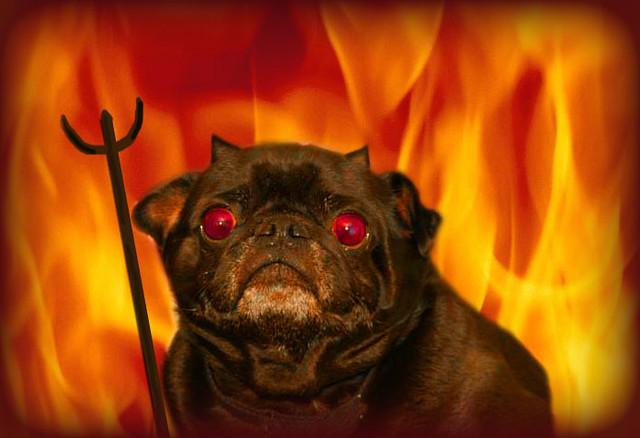 Devil Dog Flickr Photo Sharing