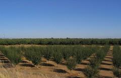 Orchard, Tehama, California