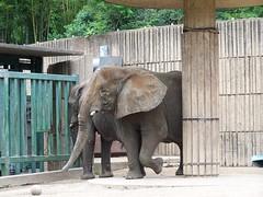 MEM-ZOO-Elephant 2