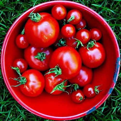 tomato in square