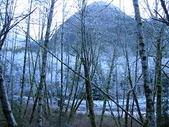 Ice Rime on Trees