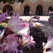Naked Ladies @ Stanford