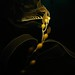 Kelp Art by - drsteve -